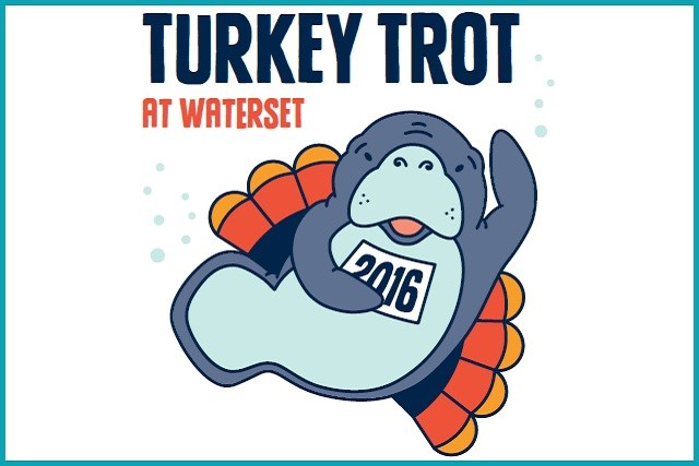 2016 Turkey Trot image